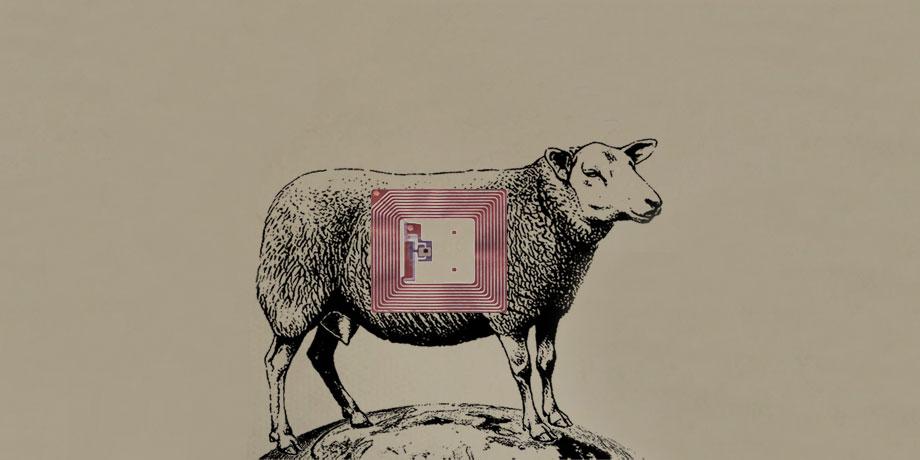 Mouton 2.0 – La Puce à l'Oreille