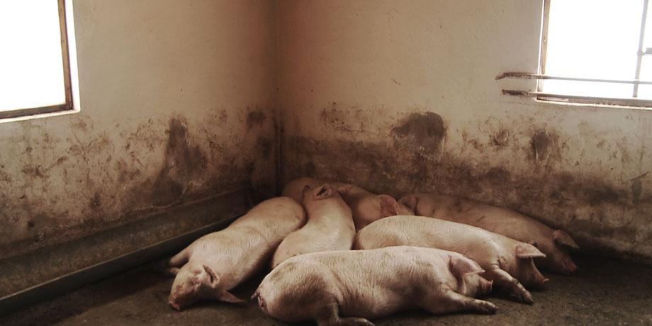 Retirons les Animaux du Menu et de ces Chambres de Torture