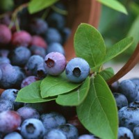 Fruits_Legumes_Bio_Cancer
