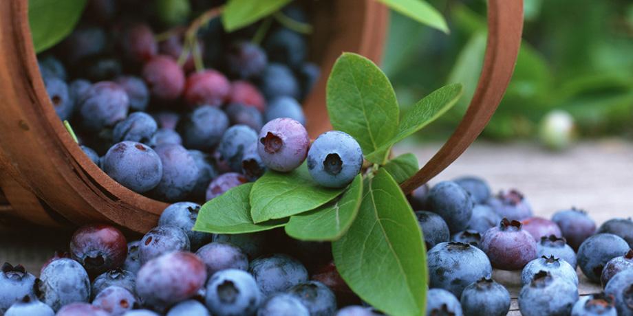 Des Fruits Biologiques contre le Cancer?