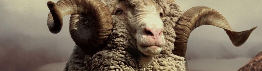 la face cach e de l 39 industrie de la laine les insoumis. Black Bedroom Furniture Sets. Home Design Ideas